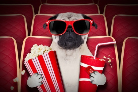 33657235 - dog watching a movie in a cinema theater, with soda and popcorn wearing glasses